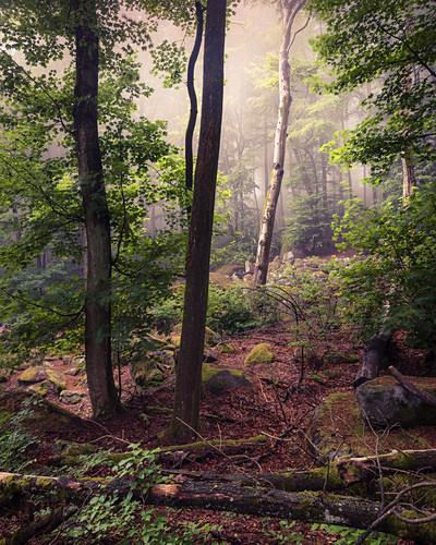 Morgennebel im Felsenmeer im Sommer, Lautertal, Odenwald, Hessen, Deutschland