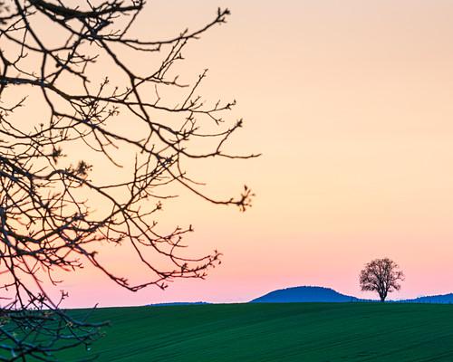 Abendsonne über Wiesen und Feldern, Niefern, Grand Est, Elsass, Frankreich