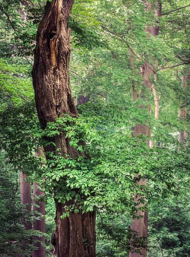 Detail eines Baumes im Wald, Odenwald, Melibokus, Hessen, Deutschland