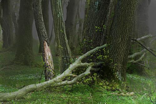Mystischer Wald mit abgebrochenem Baum in der Aubinger Lohe, Oberbayern, Bayern, Deutschland, Europa