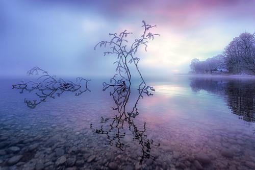 Frostiger Wintermorgen mit bereiftem Totholz bei Sonnenaufgang am Starnberger See, Bayern, Deutschland