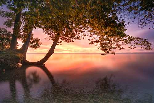 Baum am Ufer bei Sonnenaufgang am Starnberger See, Tutzing, Bayern, Deutschland