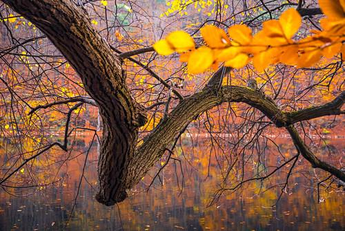 Herbstfärbung am Schweingartensee, Müritz Nationalpark, Mecklenburg Vorpommern, Deutschland