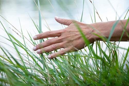 Female hand brushes through green grass with bright backdrop, Germany, Europe