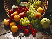 Basket of Fresh Fruit Still Life