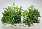 White Basket with many fresh Herbs