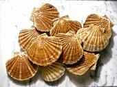Pilgrim scallops
