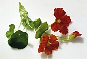Colorful Nasturtium Flowers and Leaves