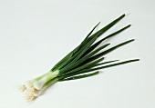 Three spring onions