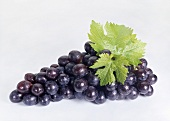 Red grapes with vine leaves