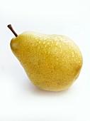 Pear (Packham's Triumph)
