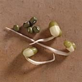 Mung Beans & Mung Bean Sprouts