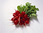Bunch of Fresh Red Radishes