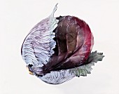 Whole Head of Red Cabbage