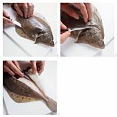 Plattfische vorbereiten & filetieren