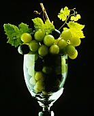 Grapes on the Vine in a Wine Glass (Symbolic)