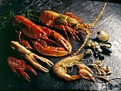 Still life of shellfish