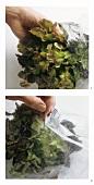 Storing lettuce