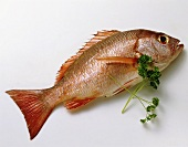 Whole Fresh Red Snapper with Parsley