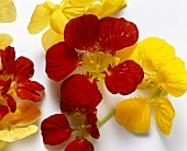 Red and Yellow Nasturtium Flowers