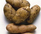 Two Kinds of Potatoes