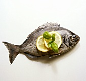 A Fresh Whole River Bream with Lemon Slices