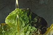Olive oil being poured over batavia lettuce