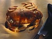 Boiled Common Edible Crab