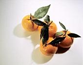 Four Mandarin Oranges with Leaves