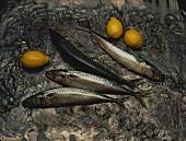Still Life with Mackerels & Lemons