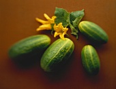 Several Cucumbers with Blossom & Drop