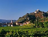 Vineyards surround Dürnstein in the heart of Wachau, Austria