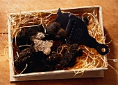 Black Truffle Mushrooms in a Box; Grater