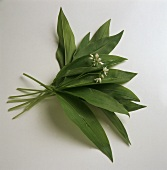 Bunch of flowering ramsons (wild garlic)