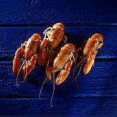 Four freshwater crayfish on blue wooden background