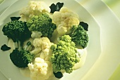 Broccoli in butter sauce with sliced truffles on plate