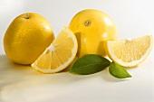 Citrus fruits: two yellow grapefruits