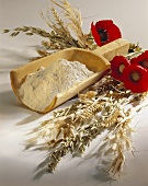 Assorted Grains with Poppies; Flour in a Wood Scoop