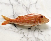 One Whole Red Mullet