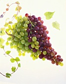 A Bunch of Red Grapes and a Bunch of Green Grapes