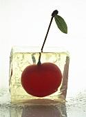 Cherry in Ice Cube