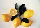 Fresh Lemons with Branch and Leaves