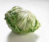 A Head of Iceberg Lettuce