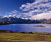 Weinberg am Lake Wanaka in Central Otago,Südinsel Neuseelands