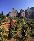 Vogelscheuche im Weinberg an den Meteora-Felsen, Griechenland
