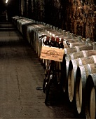 Bicycle in the wide cellar aisles, Peter Sichel, Bordeaux