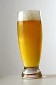 A Glass of Pilsner Beer