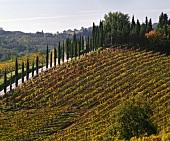 Vineyard of the Monte Vertine Estate near Radda, Chianti Classico