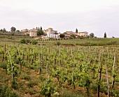 Steel tanks of wine-producer Badia a Coltibuono, Chianti Classico