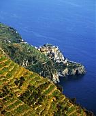 Terassen-Weinbau bei Manarola in Cinqueterre,Ligurien,Italien